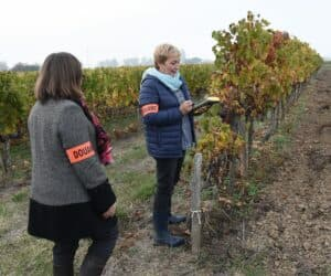 Hunting Fraudsters in French Wine Heartland