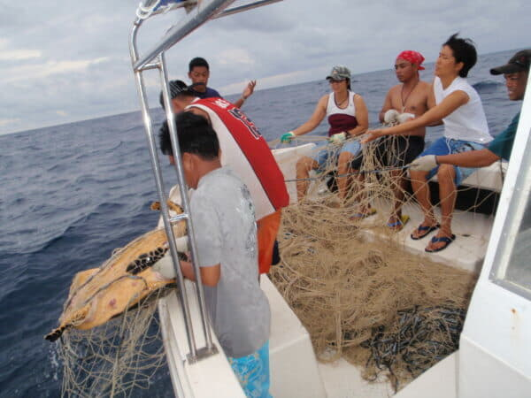 Reef Guardian and Lankayan Island Dive Resort teams pull a bottom gillnet that entangled marine creatures including sharks, turtles and rays