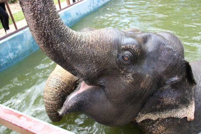 Elephants are a huge on-land attraction in Phuket; Photo: Risa Merl