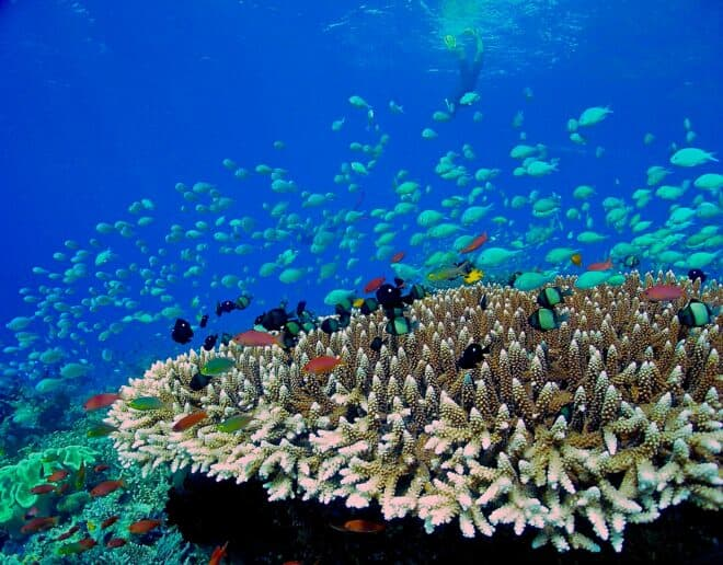 Protecting the ocean will has become a key theme for the event