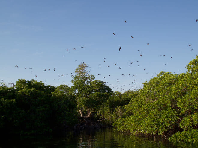Fruit bats, some boasting a wingspan of 1.5m, generally appear at dusk